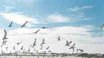 Pulau burung banten